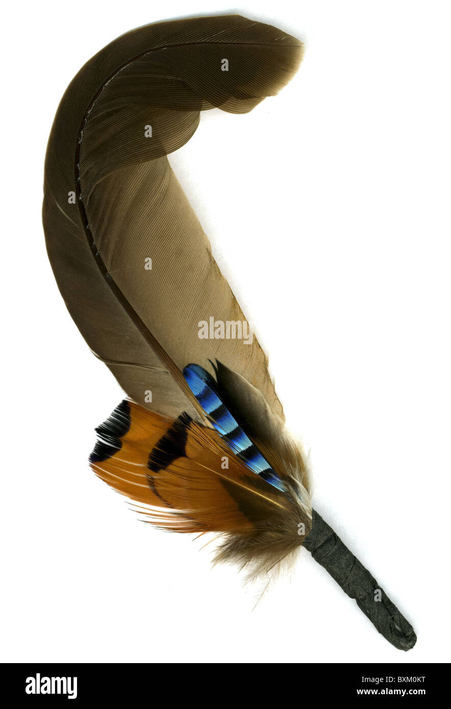 fashion, accessoires, plume, 1940s, 40s, 20th century, historic, historical, hat feather, feathers, bird's, - Stock Image