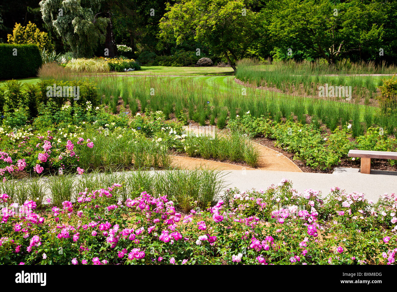 The new Rose Garden,opened in 2010, in the Savill Gardens, part of the Royal Landscape, near Windsor, England, UK - Stock Image
