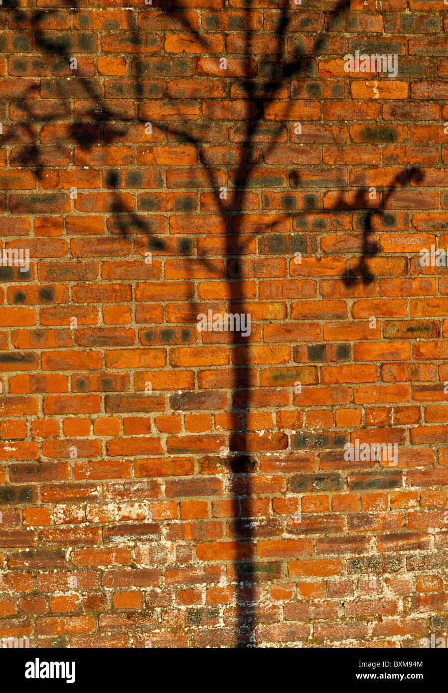 tree shadow on a red brick wall - Stock Image
