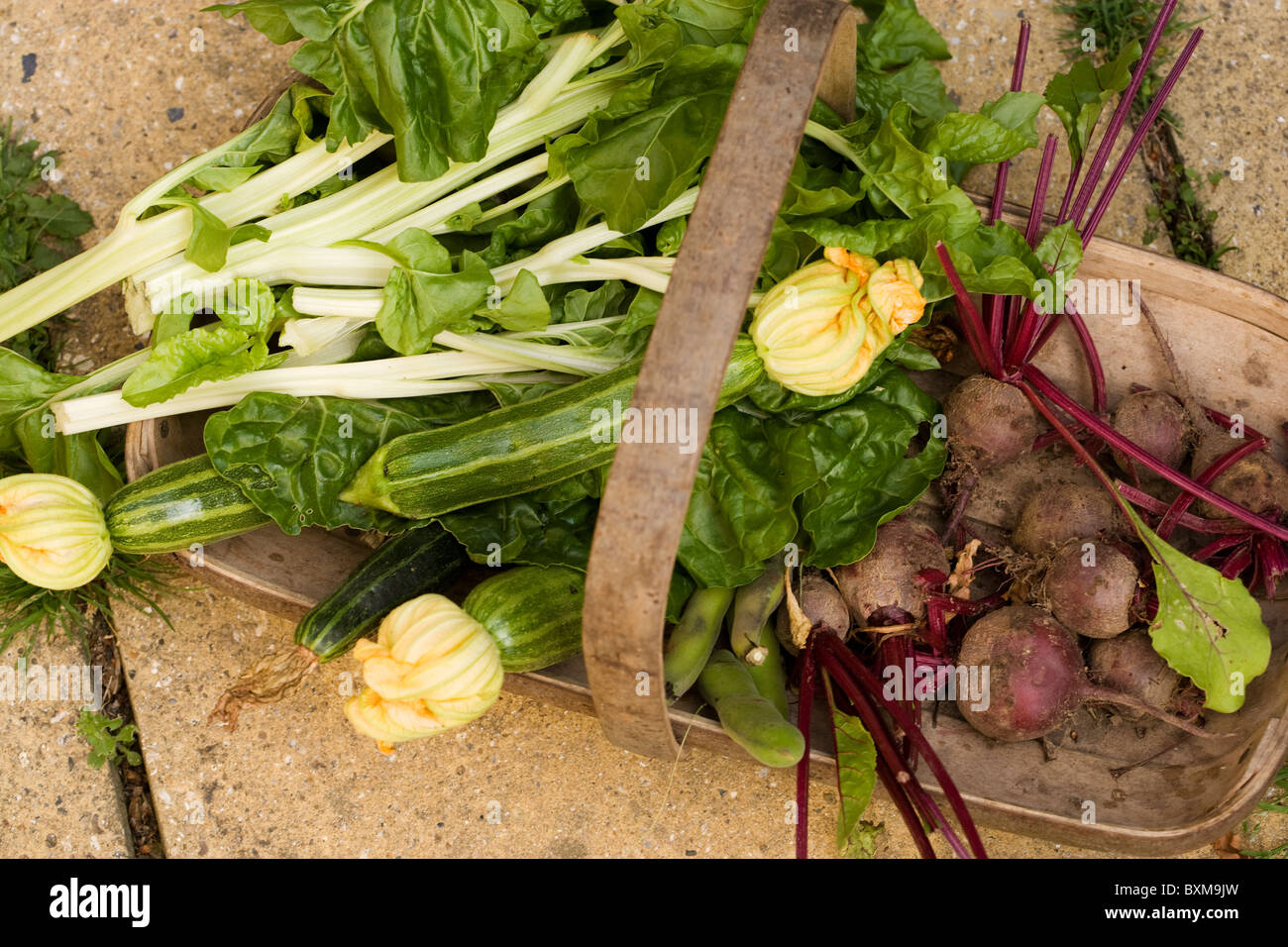 Trug of fresh produce, courgettes, beetroot, spinach, chard and broad beans - Stock Image