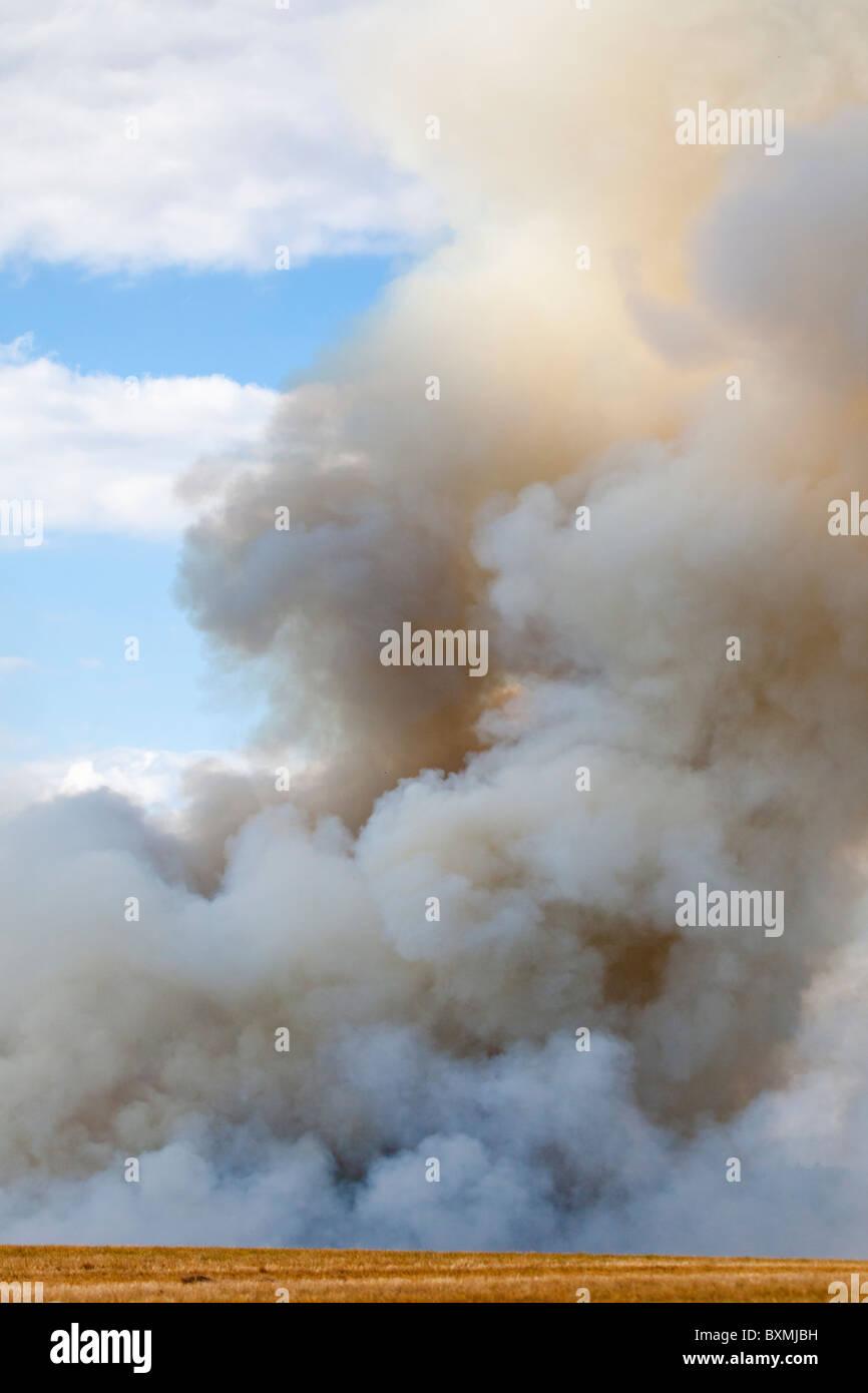 USA; Oregon; near Silverton; Burning farm fields - Stock Image