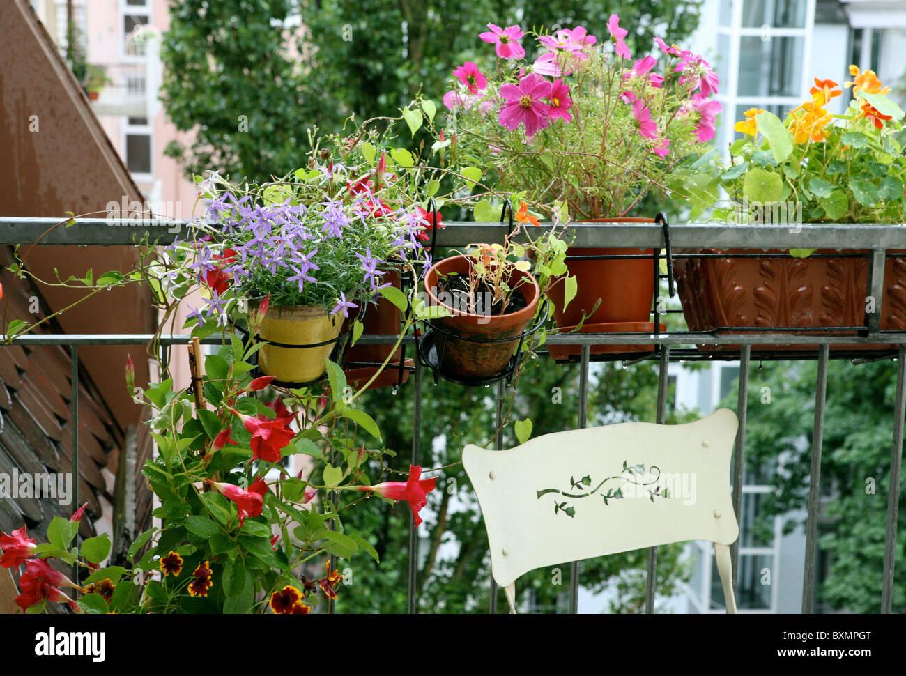 Blumen, Balkon   Stock Image