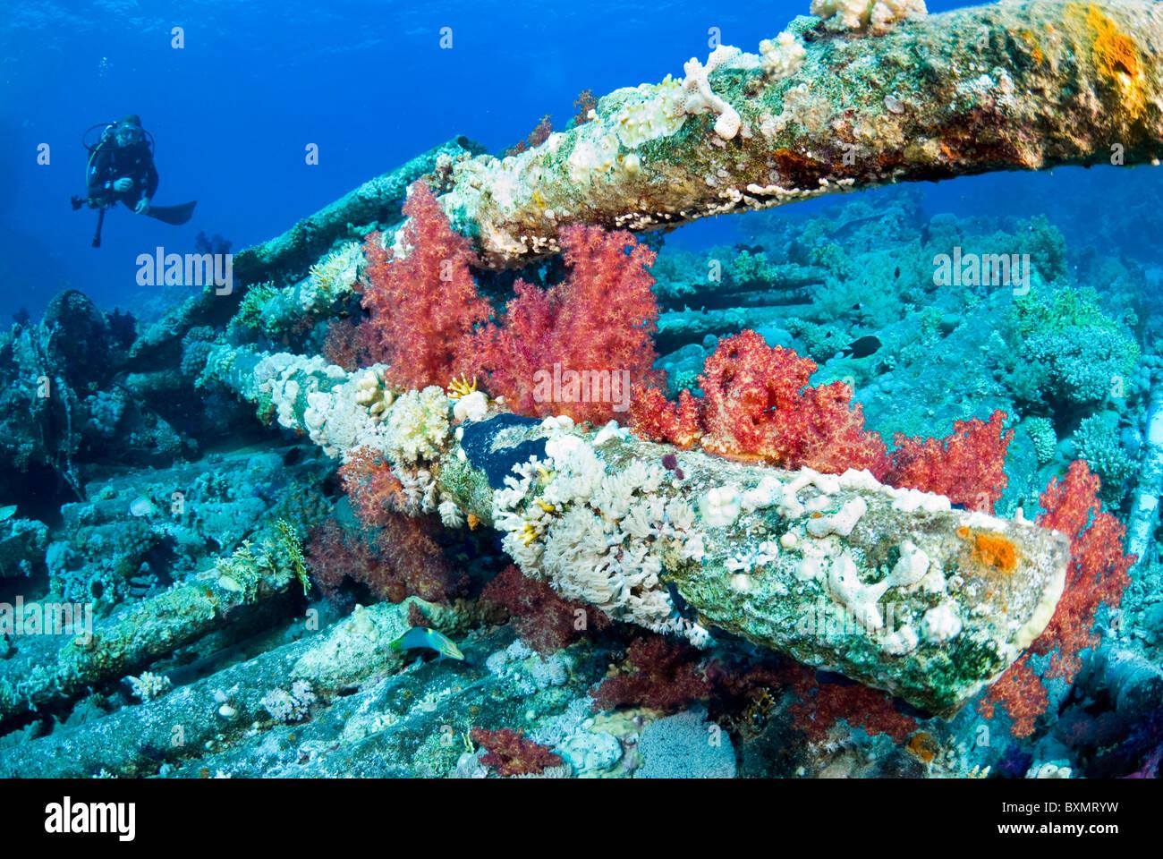 Wreck of Yolanda, Shark Yolanda reef, Ras Mohammed national park, Sinai, Egypt, Red Sea - Stock Image