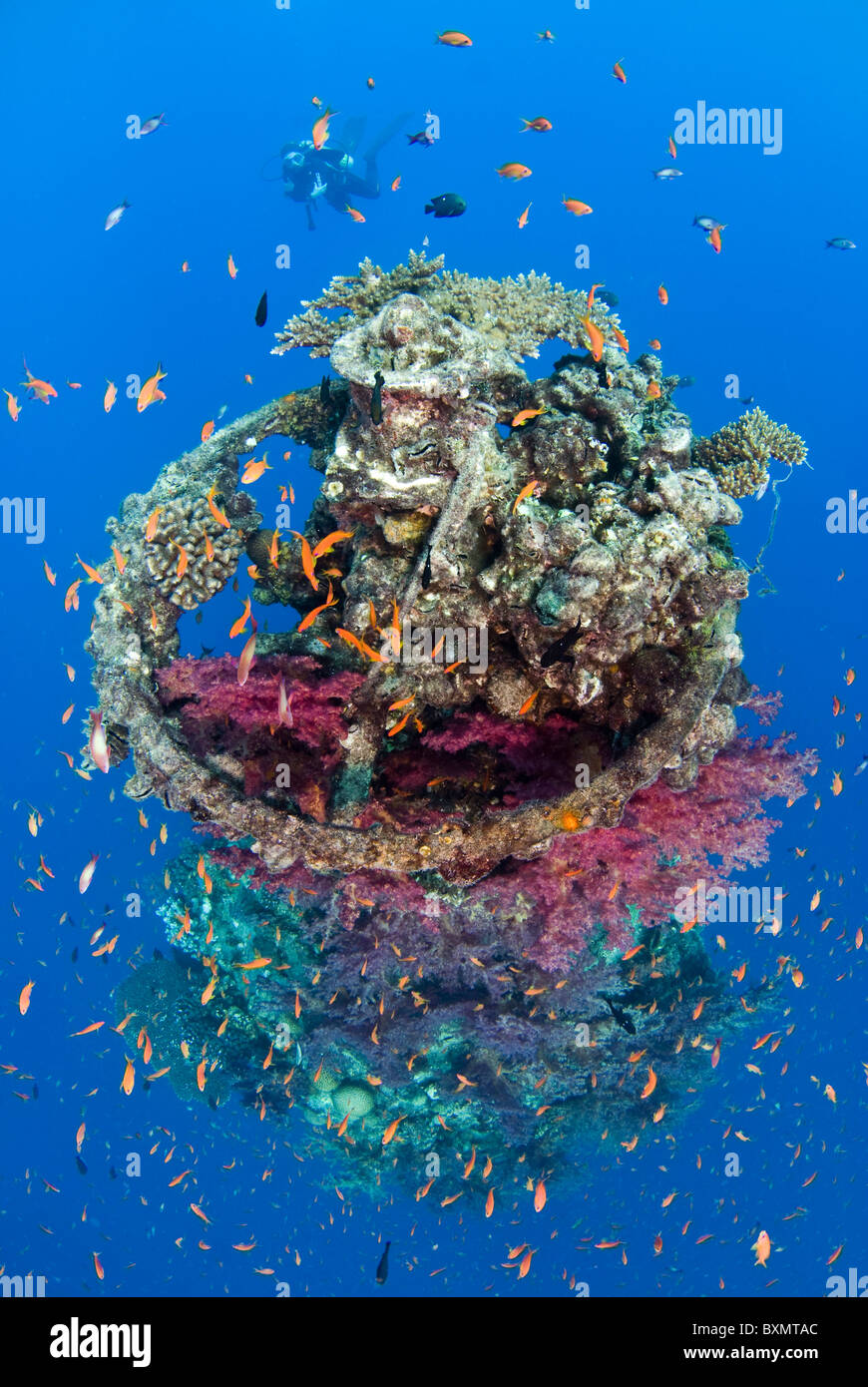 Coral growth on the buoy wreck structure. - Stock Image