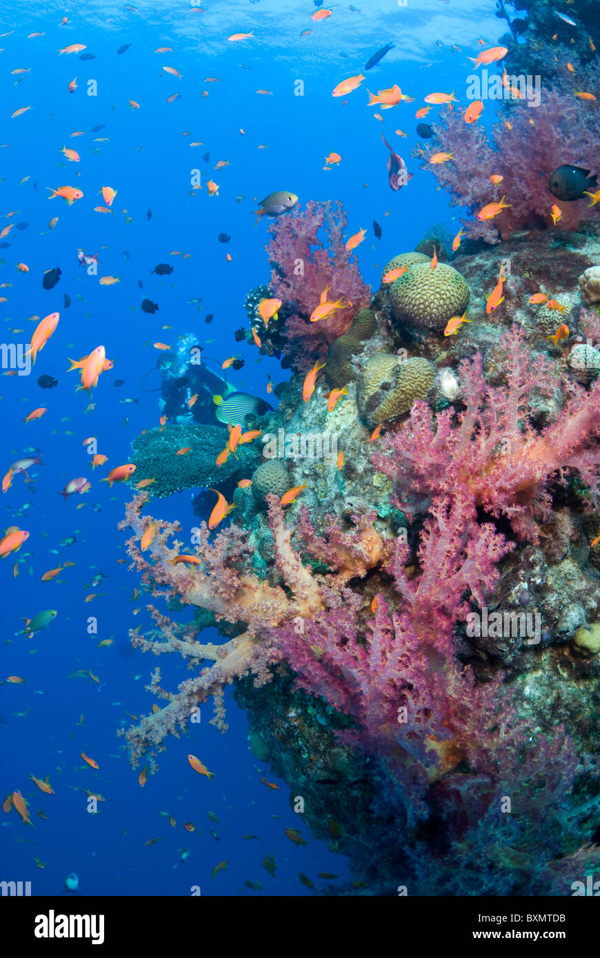Coral growth on the wreck structure - Stock Image