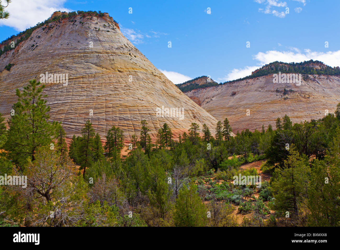 Checkerboard Mesa in Zion national park - Stock Image