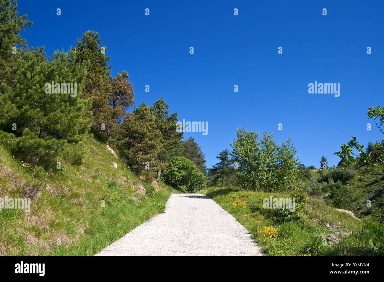 beautiful dirty in italian country road under a bright blu sky - Stock Image