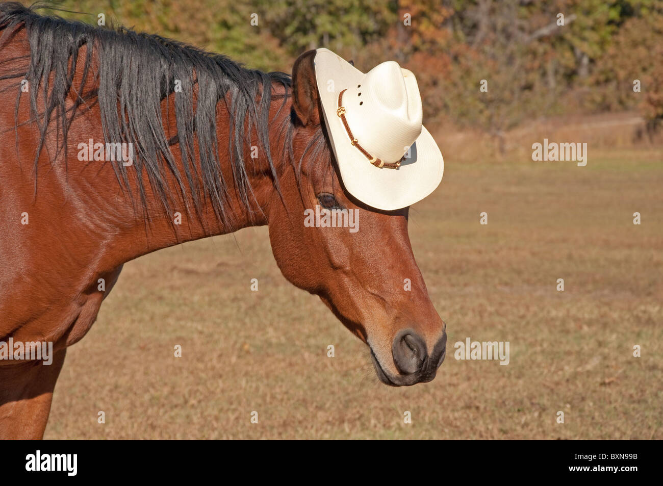 Silly Horse High Resolution Stock Photography And Images Alamy