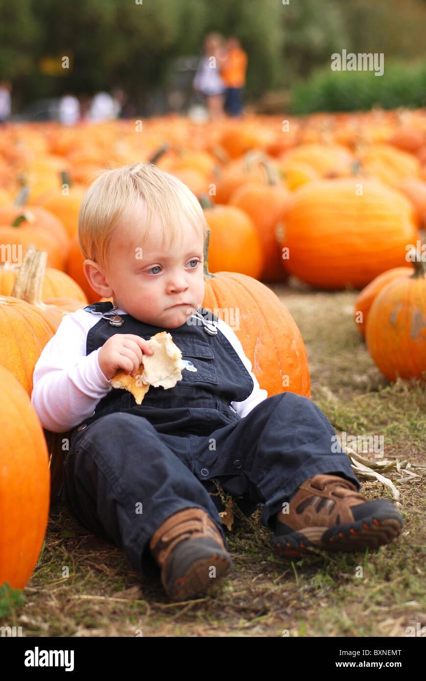 Young boy at a pumpkin farm Stock Photo