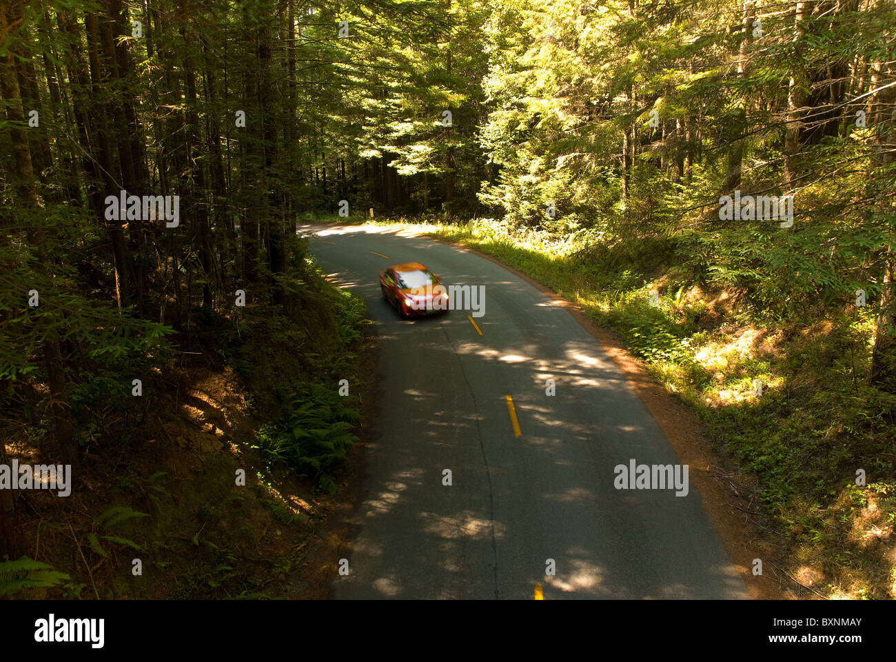 Car driving on road deep inside Redwood National Park Stock Photo