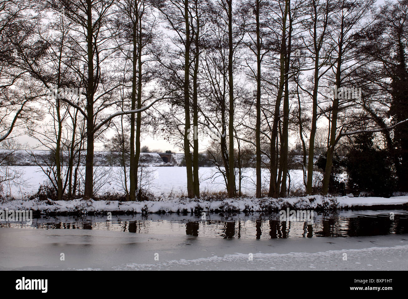 Alder trees by frozen canal in winter - Stock Image