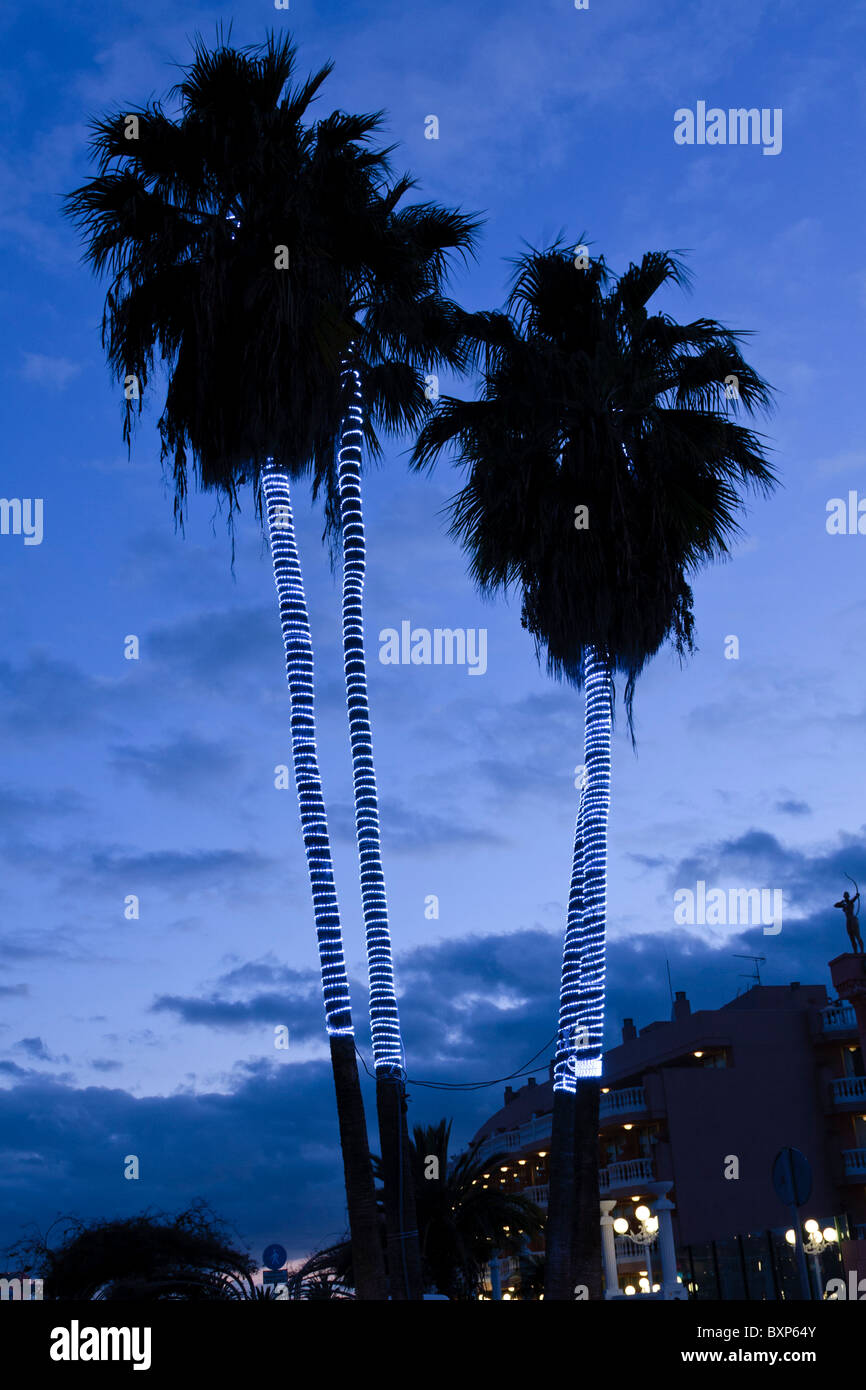 palm trees decorated with rope lights for christmas in las americas tenerife canary islands spain