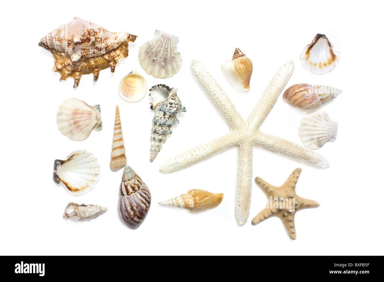 starfish and shells set on white background - Stock Image