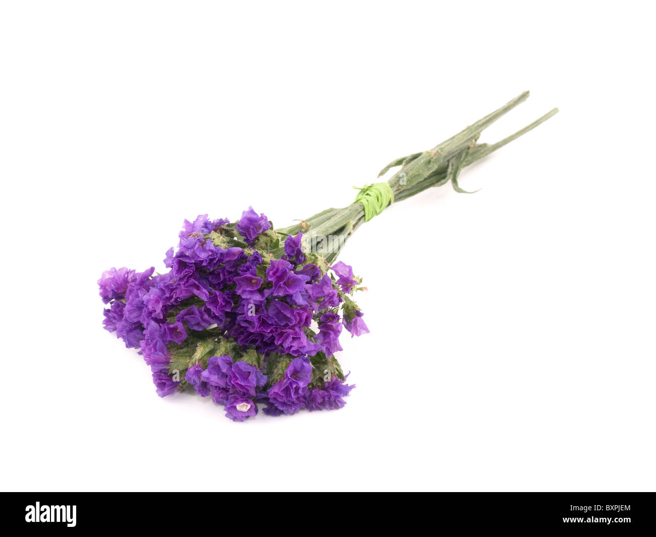 Statice flower stock photos statice flower stock images alamy small bouquet of purple statice flowers on white background stock image mightylinksfo