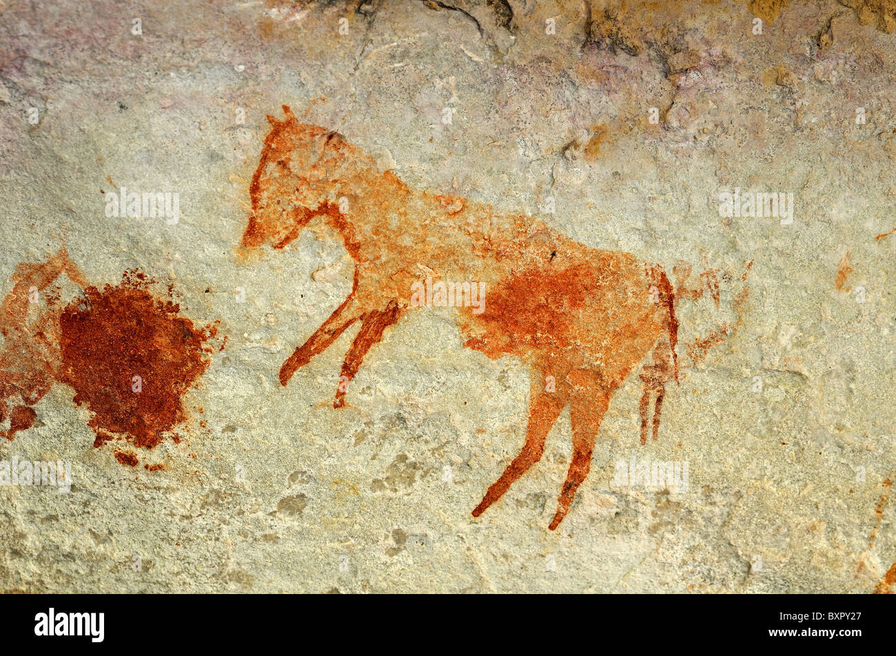 depiction of an extinct quagga zebra, prehistoric rock paintings by the San people, Cederberg Mountains, Western - Stock Image