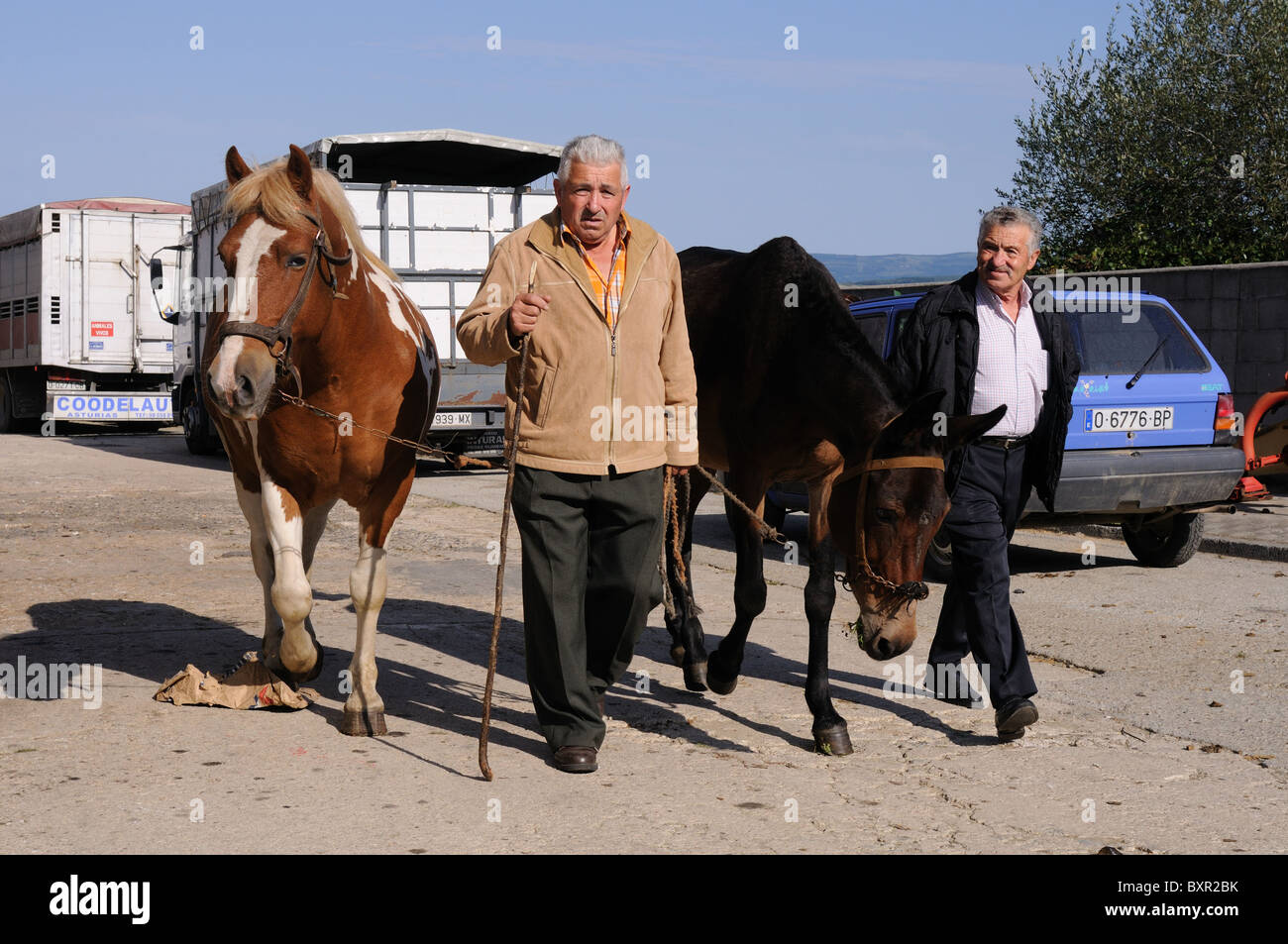 Men leading horses for sale  ' Cattle Fair  ' FONSAGRADA . Lugo  Galiza SPAIN - Stock Image