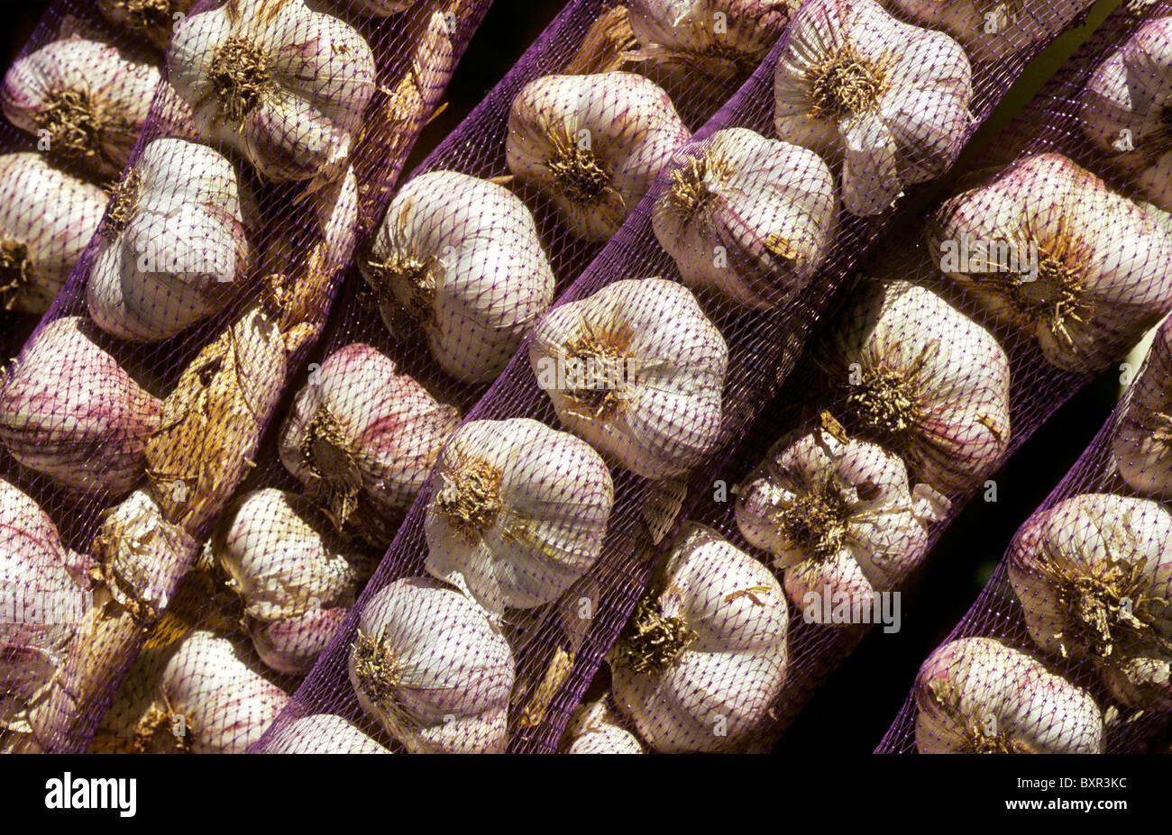 Garlic (Allium sativum) on display in strings, Belgium - Stock Image