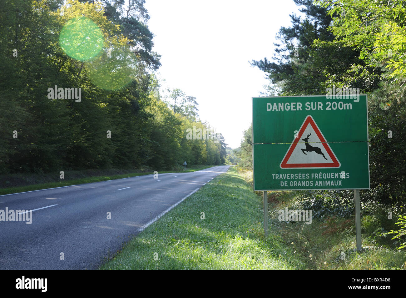 Sign warning of danger for 200 metres because of frequent crossings by deer and large animals on D332 through Compiegne - Stock Image