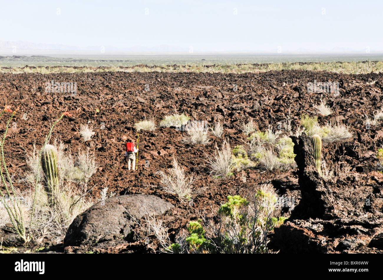 Geologist in lava field near Tecolote cinder cone, El Pinacate Biosphere Reserve, Sonora, Mexico - Stock Image