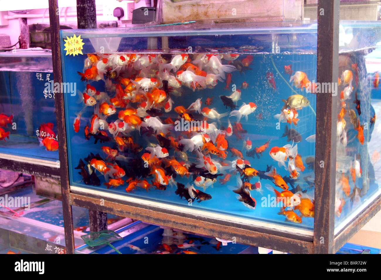 Aquarium pet shop selling goldfish in plastic bags in the for Fish and pet store