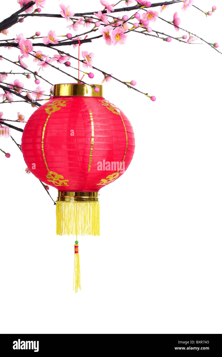 Chinese Lantern on Plum Branch,Isolated on White. - Stock Image
