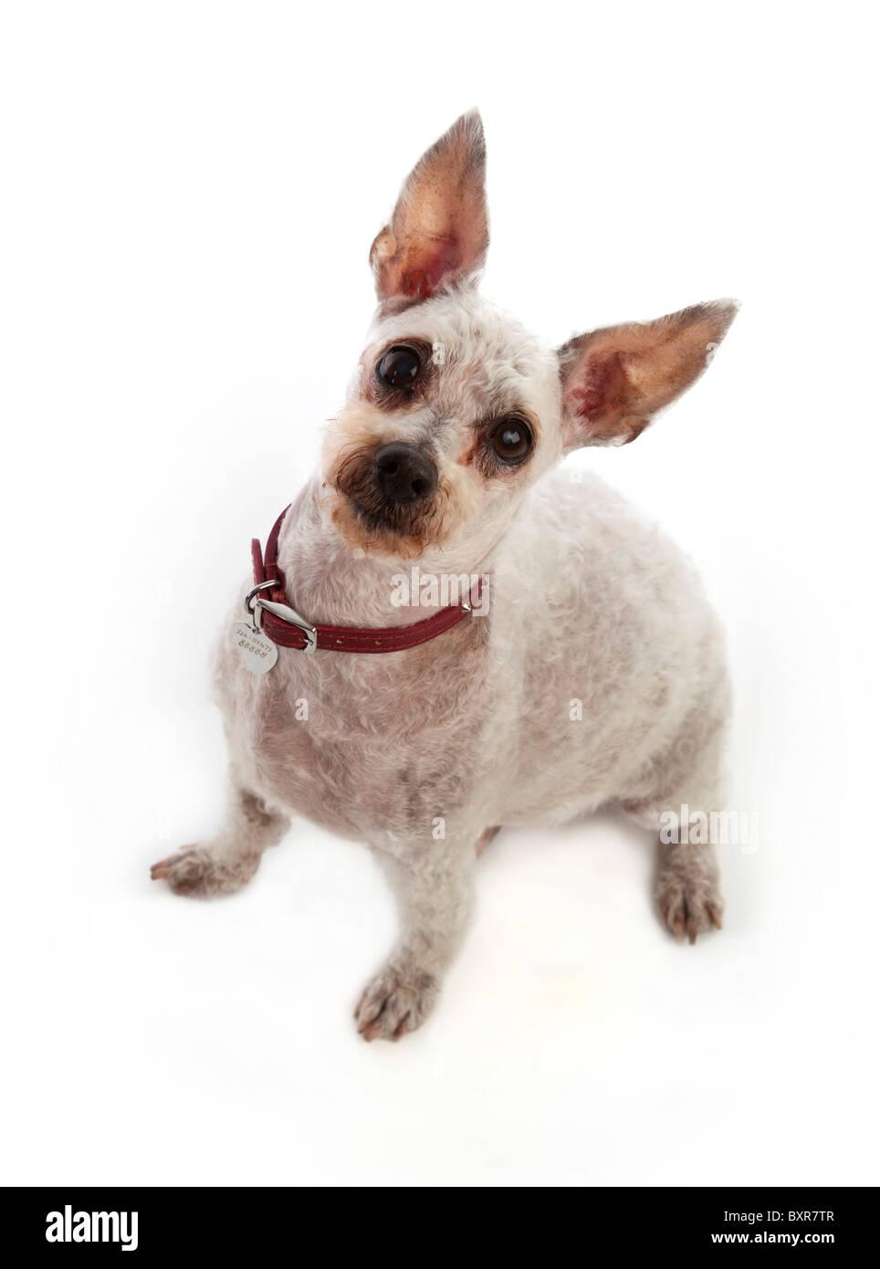 pet dog - Stock Image
