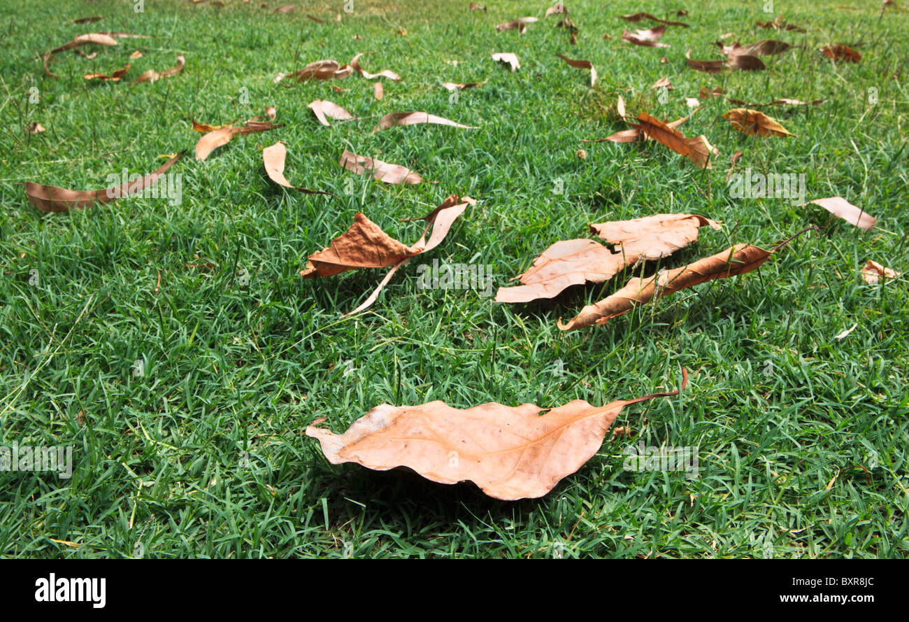 Leaves on the lawn - Stock Image
