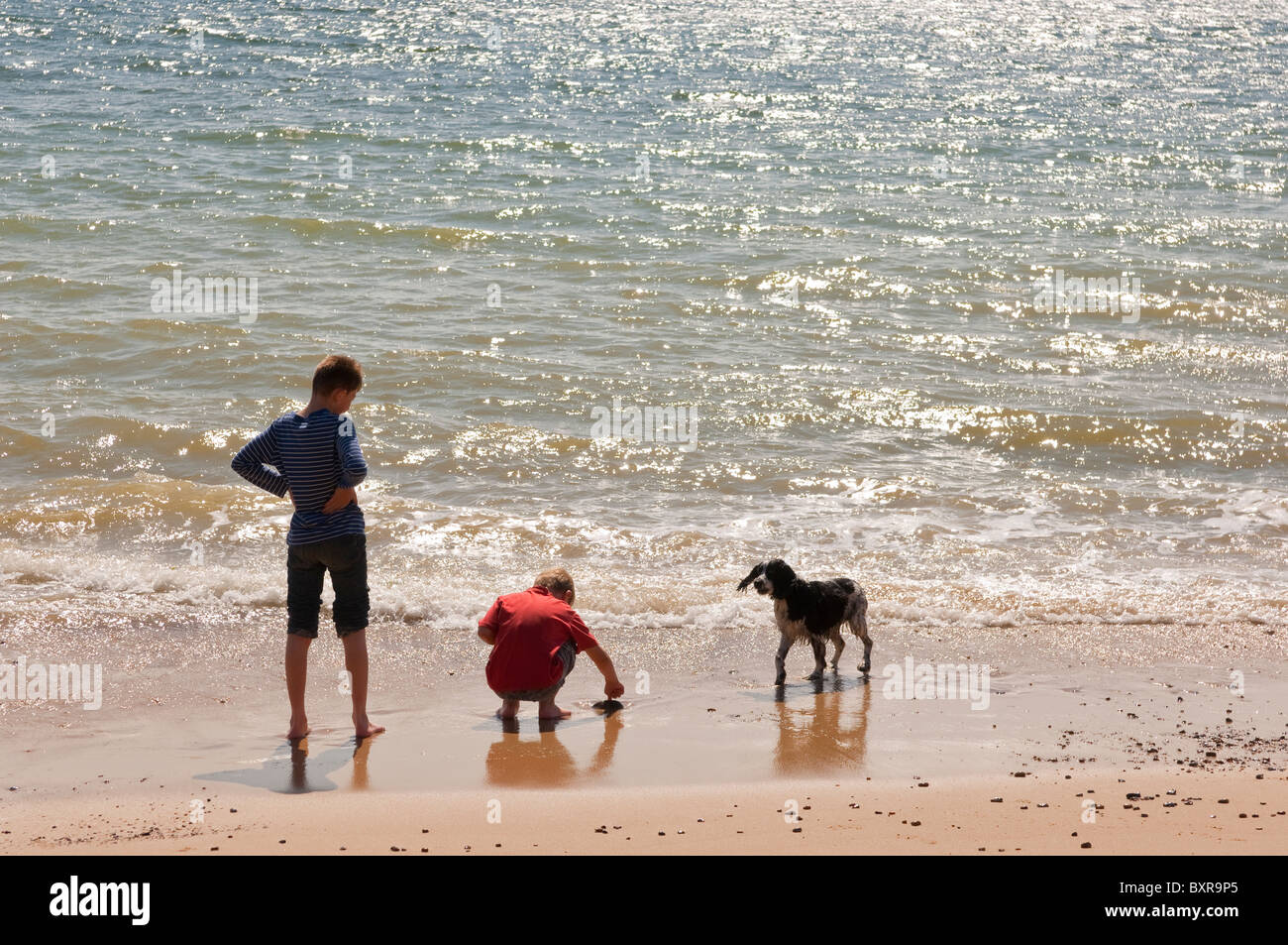 A MODEL RELEASED picture of two boys and their dog on a UK beach paddling in the sea in the summer - Stock Image
