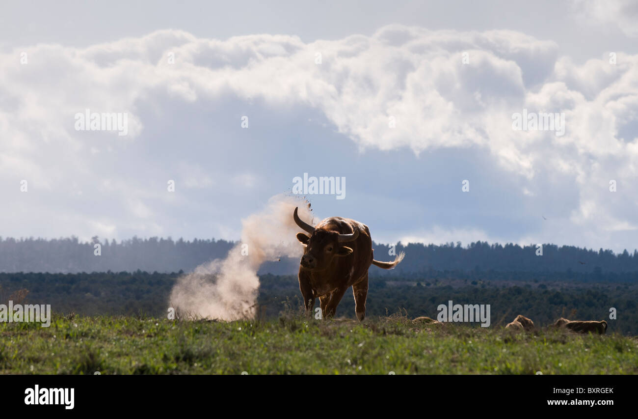 Bull Dust Stock Photos Amp Bull Dust Stock Images Alamy