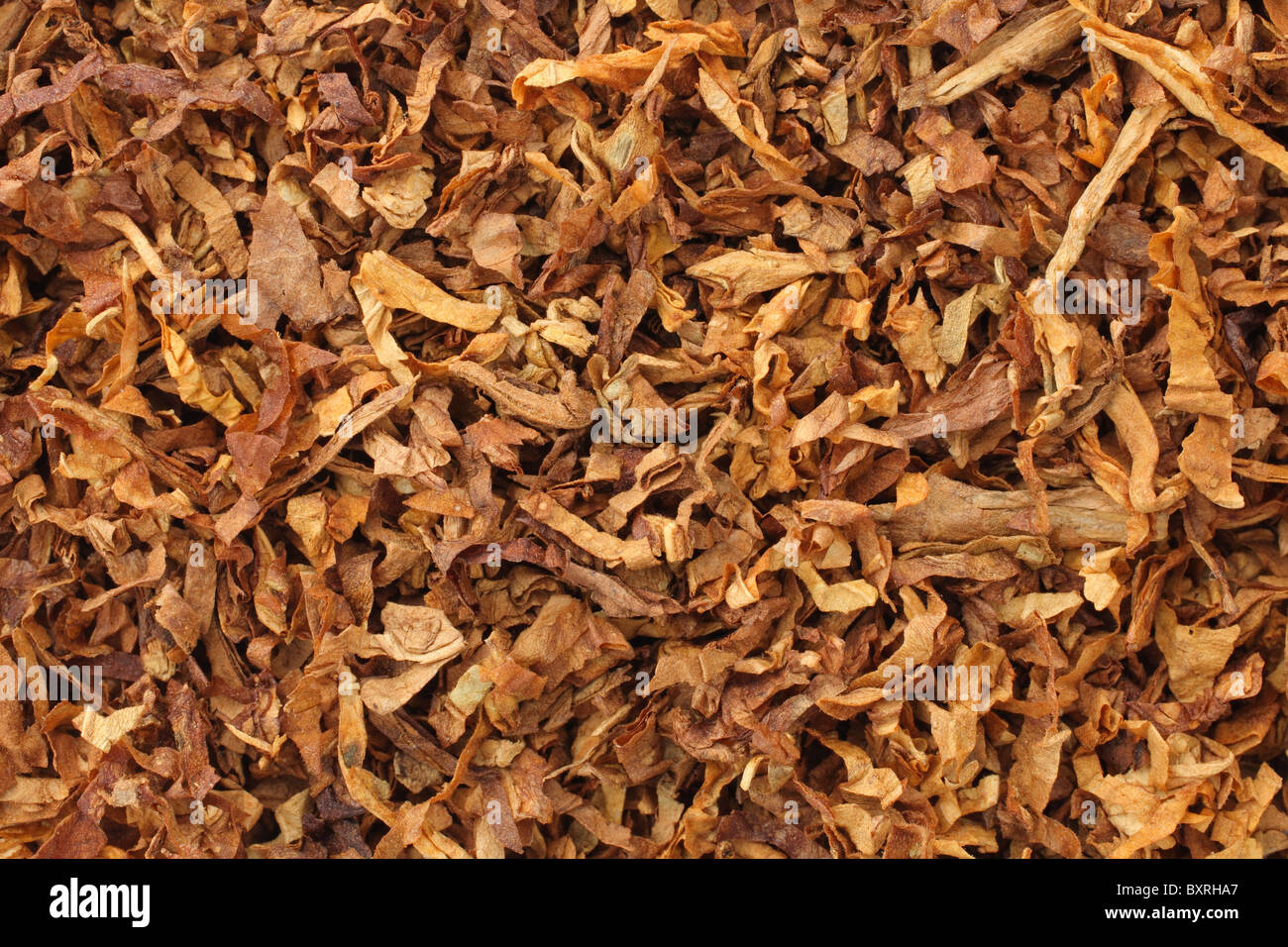 dried smoking tobacco leaves close-up macro view - Stock Image