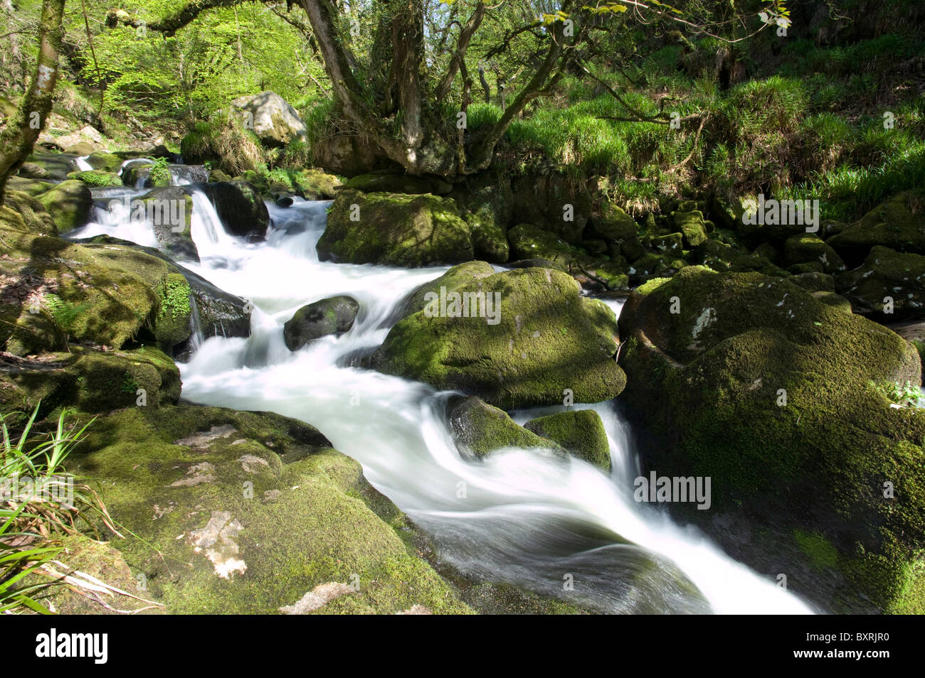 Great Britain, England, Cornwall, Bodmin Moor, Golitha Falls on the River Fowey - Stock Image