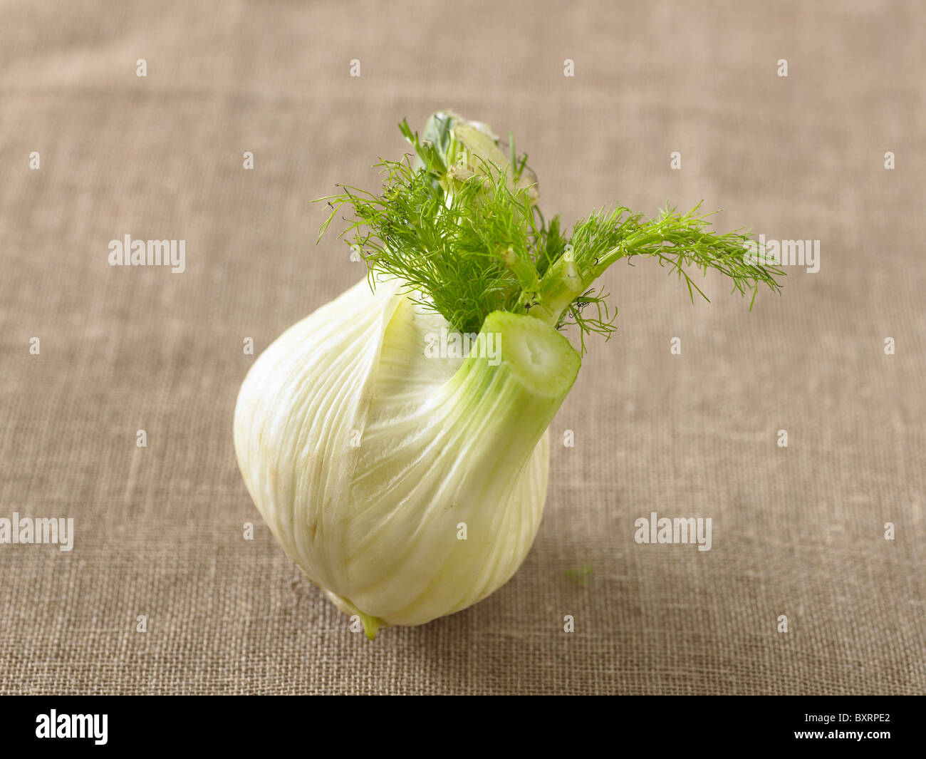 Fennel - Stock Image