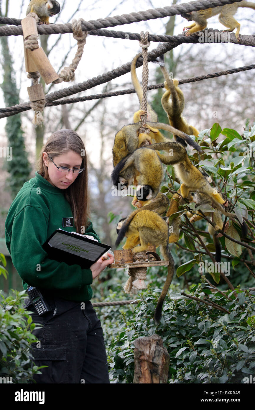 Zookeepers carryout the annual stocktake at London Zoo, Regents Park, London, 4th January 2011. Stock Photo