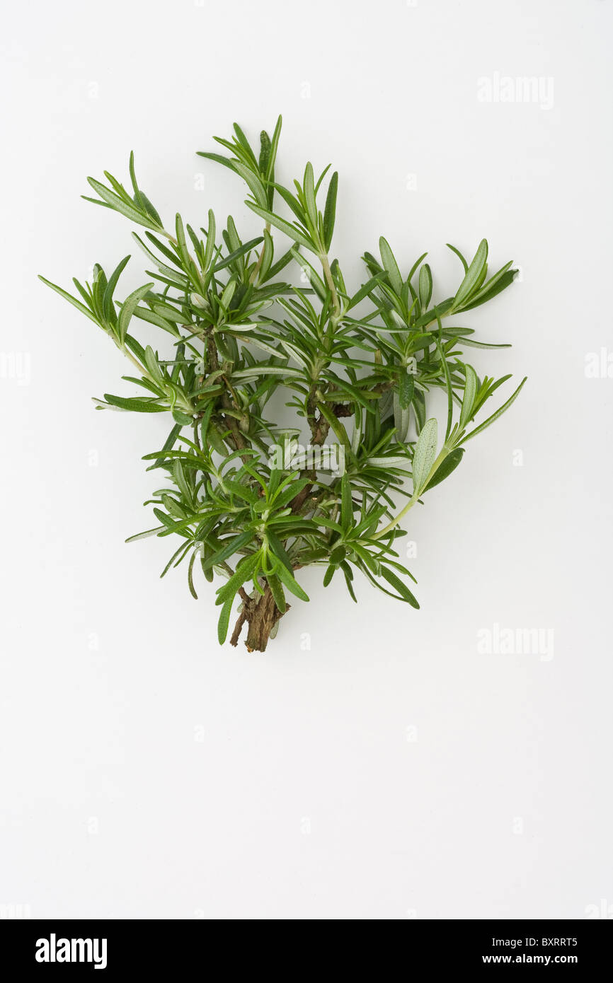 Close-up of rosemary - Stock Image