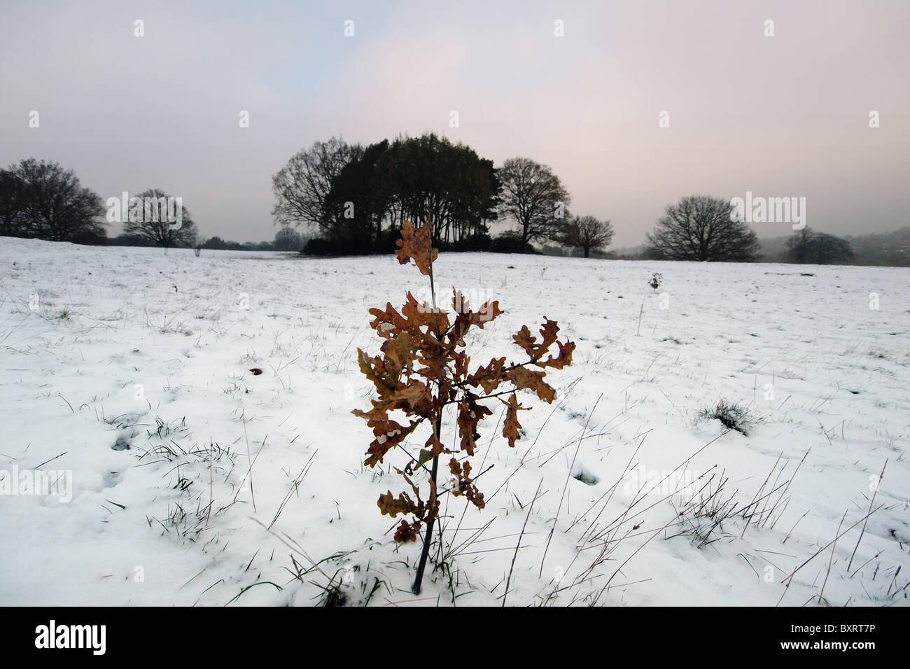 Snow on Hampstead Heath in Winter in London England Uk - Stock Image