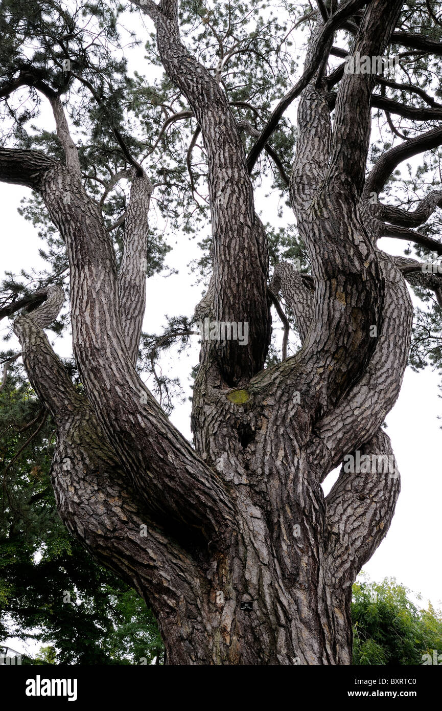 Branches of a tree - Stock Image