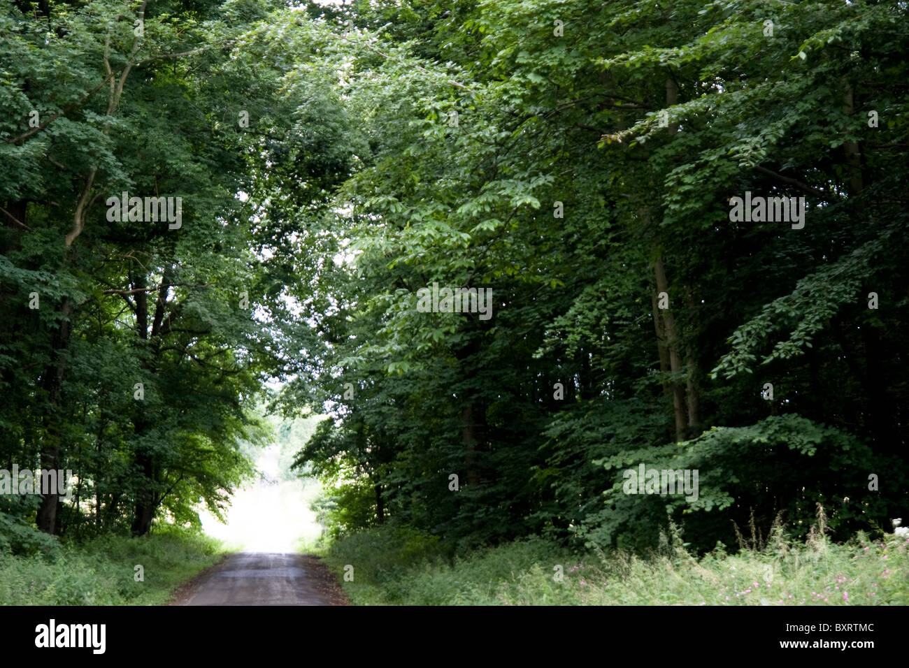 France, Normandie, Foret d'Eu, View of road through forest - Stock Image