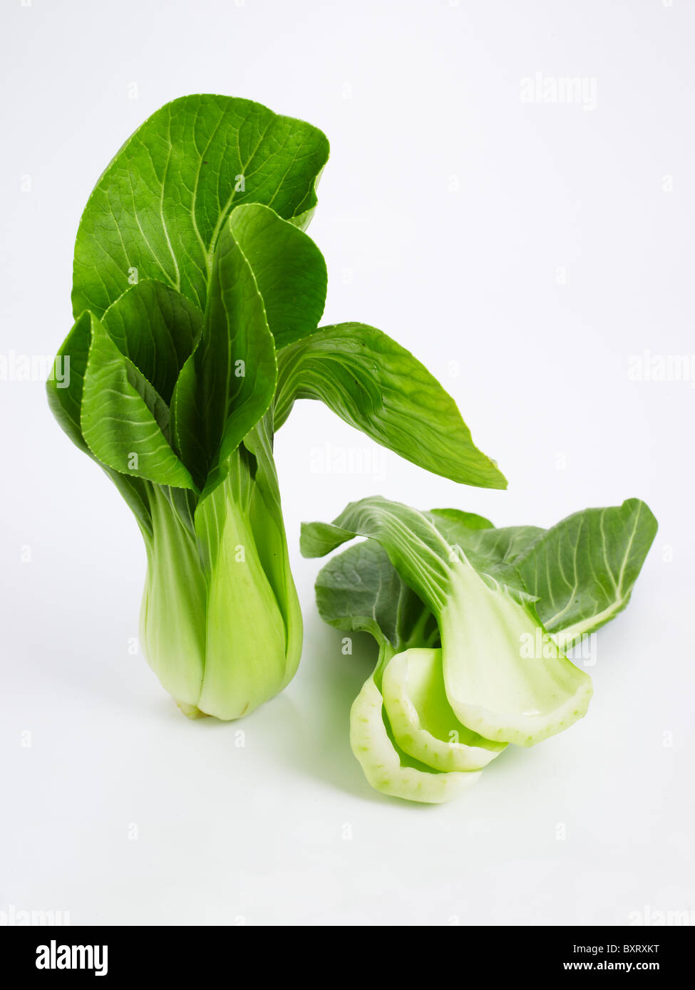 Bok Choy with leaf separated on white background - Stock Image