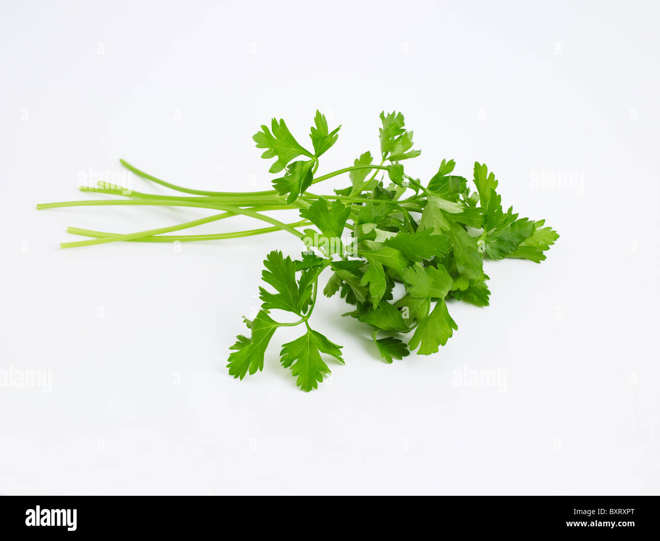 Flat Leaf Parsley on white background - Stock Image