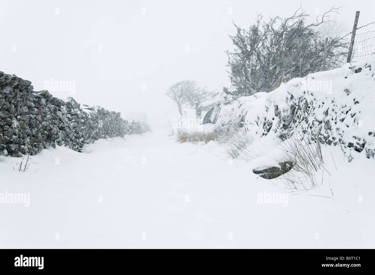 A winter storm raging on a country lane Stock Photo