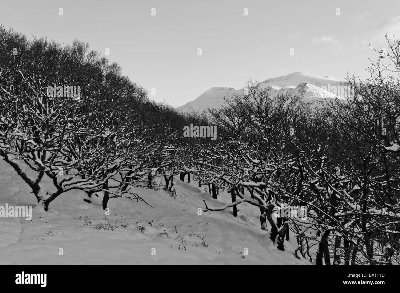 Coed Dinorwic and the Snowdon Massif in winter. Black and White Stock Photo