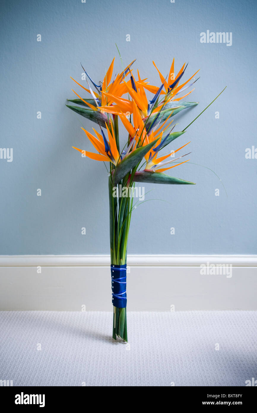 Bird Of Paradise Flowers Stock Photos & Bird Of Paradise Flowers ...