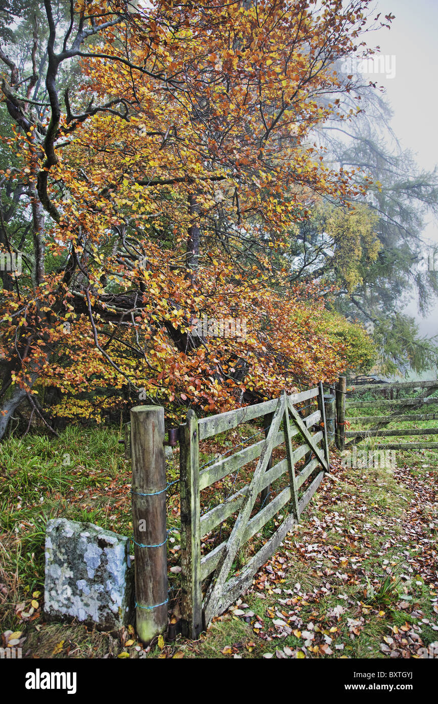 Scenic view with farm gate and path in Scotland. - Stock Image