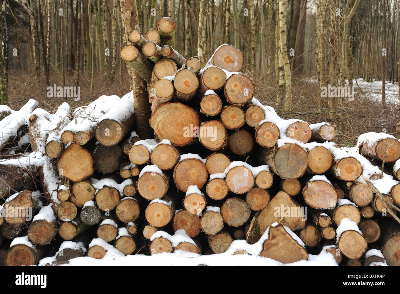 Logs covered in snow in woodland - Stock Image