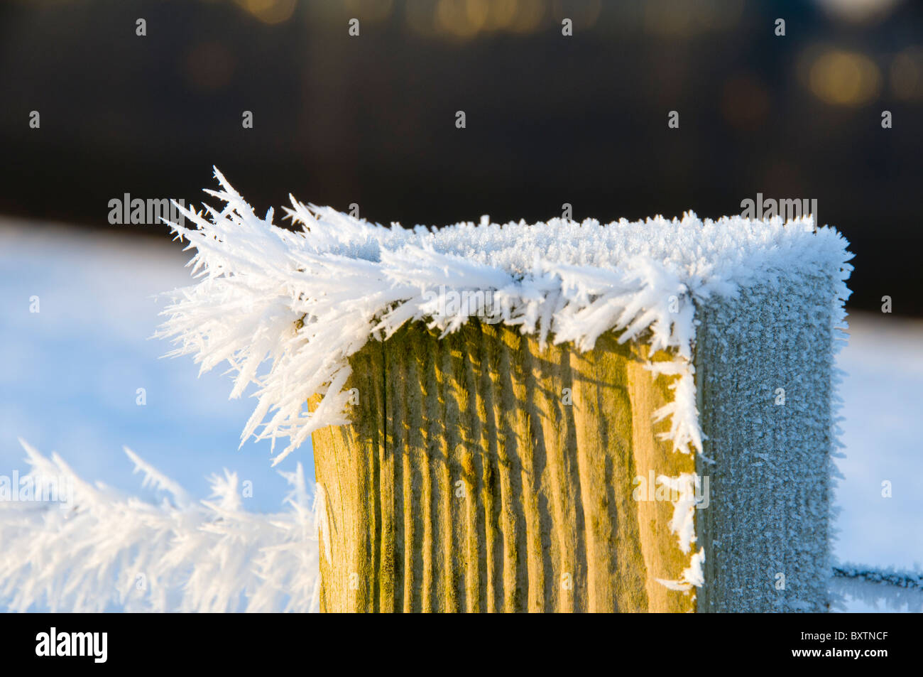 Frost crystals on a fence post, near the village of Scarfskerry, Caithness, Scotland, UK - Stock Image