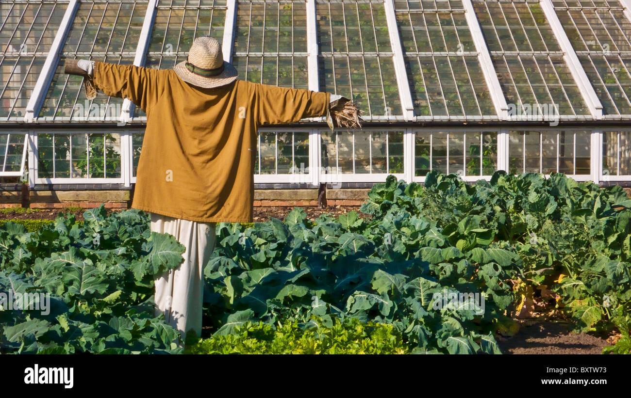 Scarecrow in a vegetable garden, England, UK, GB, EU, Europe - Stock Image