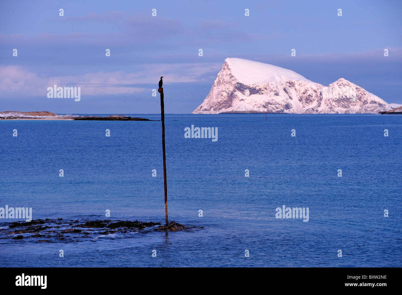 Cormorant sits on top of a pole in the dark blue sea. Polar night north of the Arctic Circle in North Norway. Stock Photo