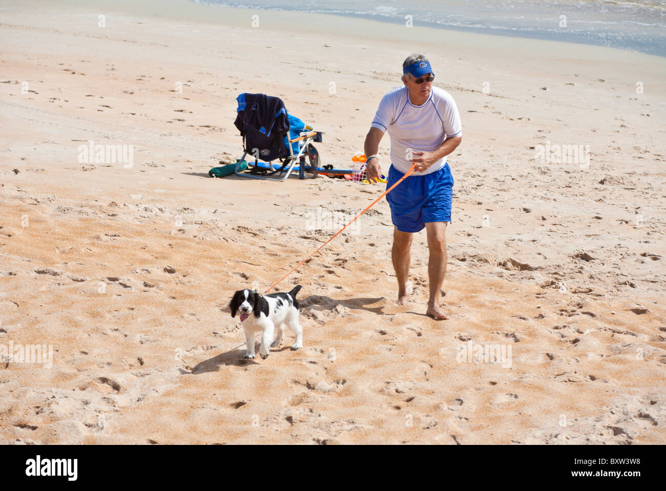 Middle aged man walks his pet English Springer Spaniel on the beach at Beverly Beach, Florida - Stock Image