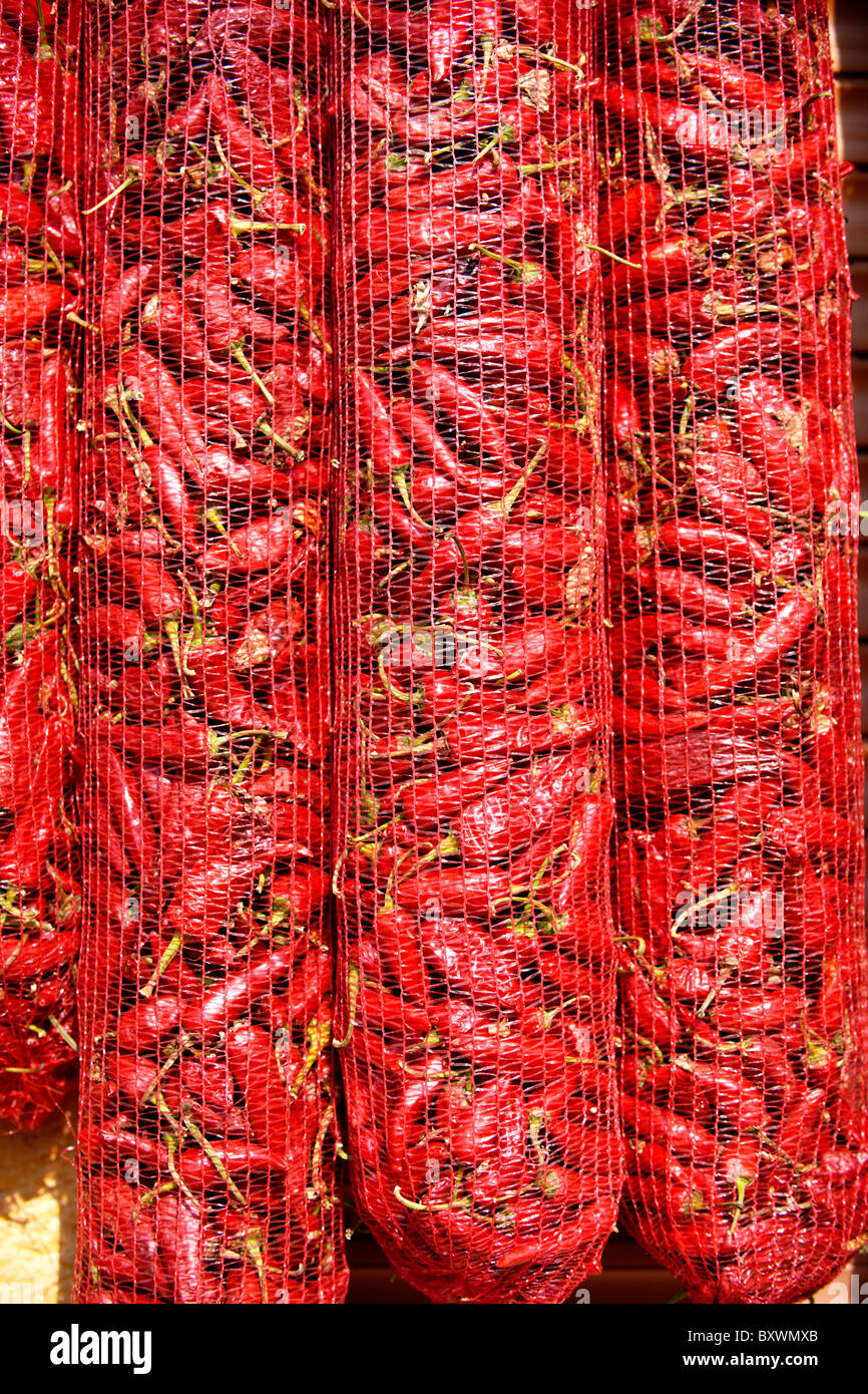 Capsicum annuum or chili peppers drying to make Hungarian paprika - Kalocsa Hungary Stock Photo