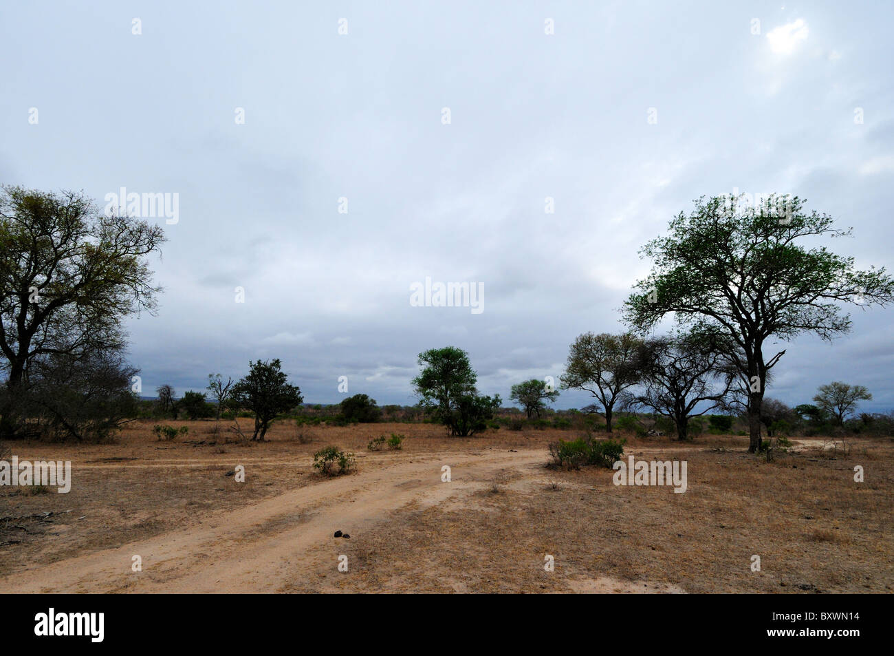 A dirt trail and a few trees. Kruger National Park, South Africa. - Stock Image